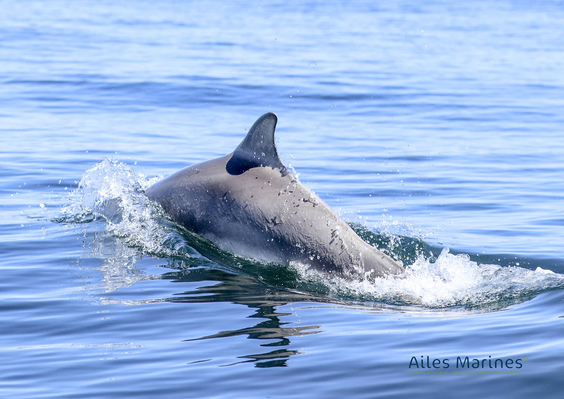 ailes-marines-navy-dolphin-fins