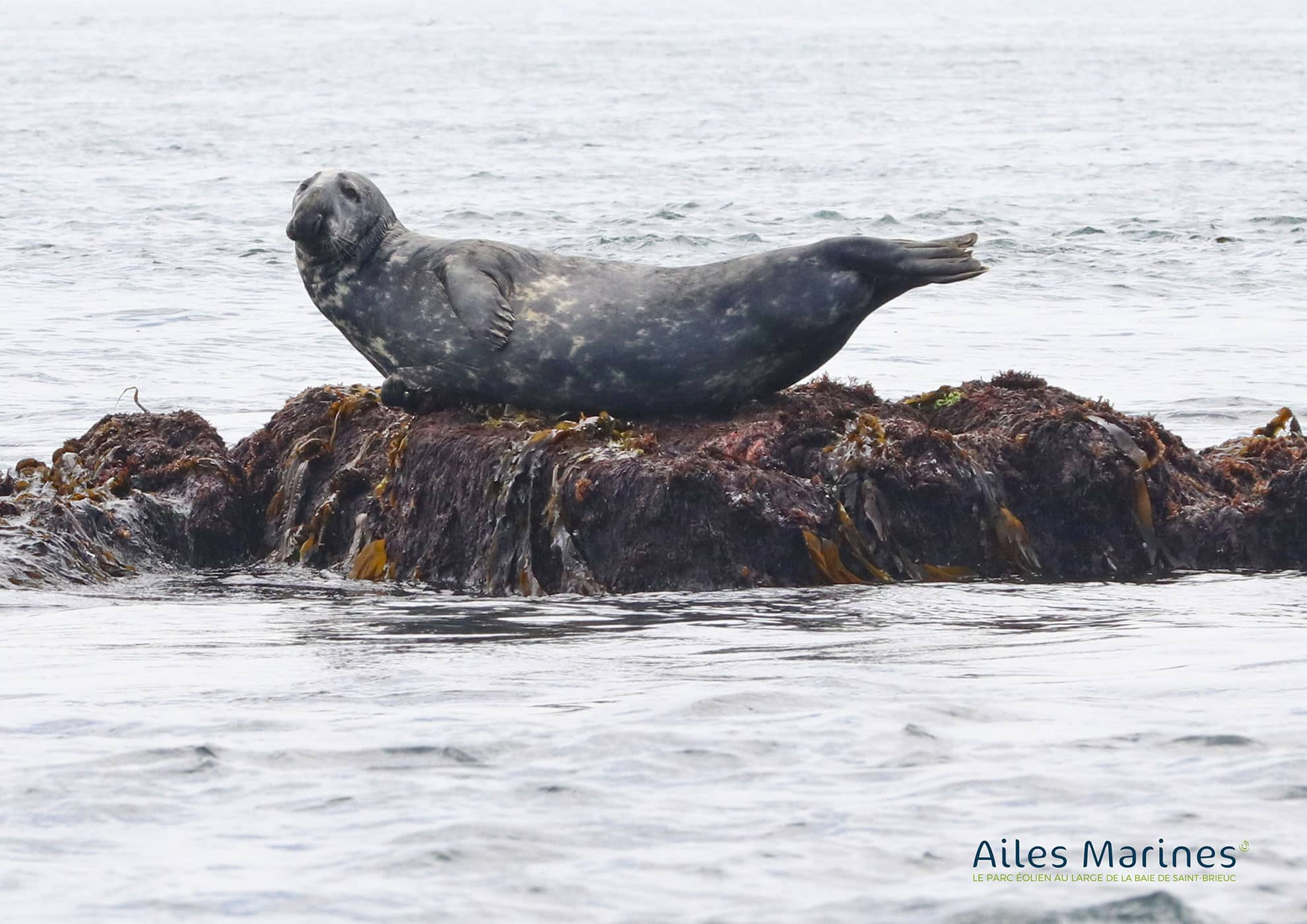 ailes-marines-seal-on-rock