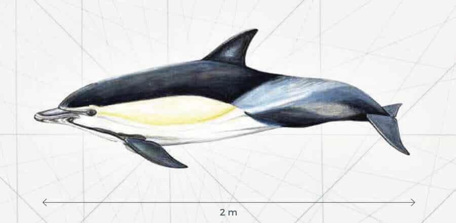 Amélioration de la quiétude des mammifères marins
