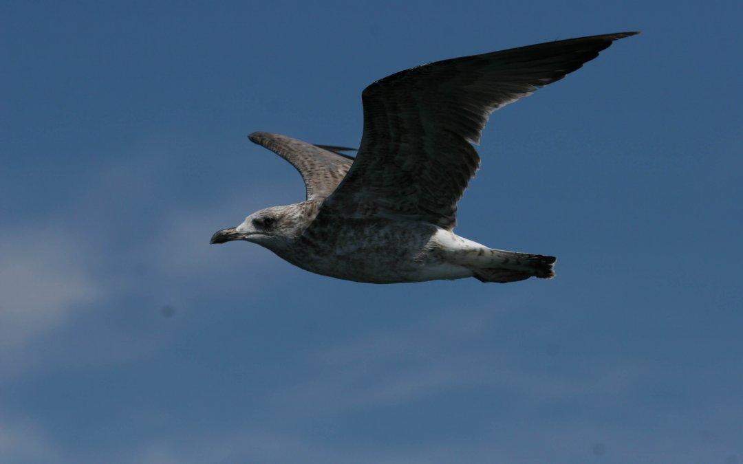 Expérimentation d'un système d'évitement des collisions pour l'avifaune